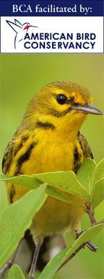 American Bird Conservancy prairie warbler