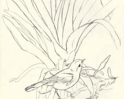 Sketch for International Migratory Bird Day 2013