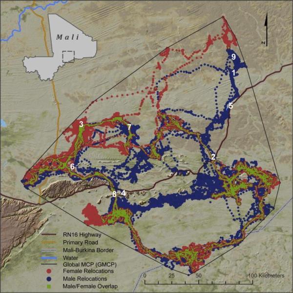 Movement map of Gourma elephants