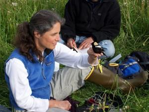bird banding (photo: R. Renfrew)