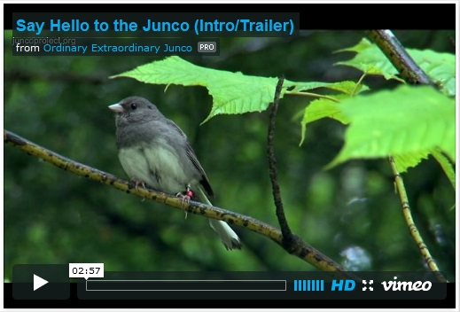 Juncoproject.org
