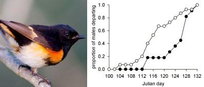Figure 3 from Tonra et al. (2013)