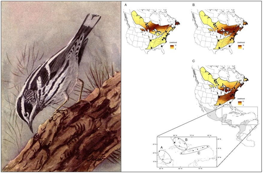 Black-and-white Warbler isotope connectivity map