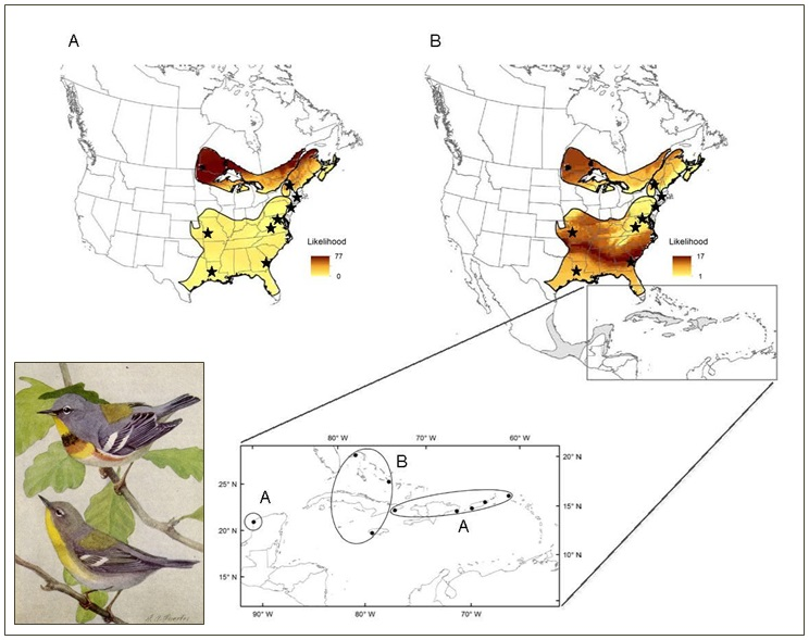 Northern Parula isotope connectivity map (large)