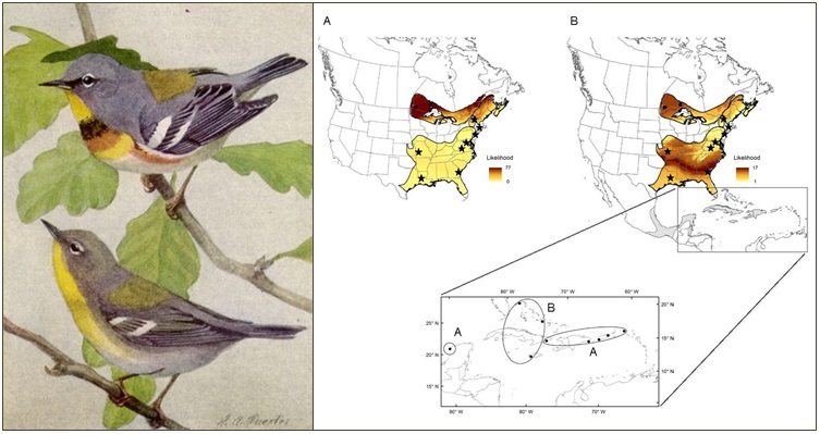 Northern Parula isotope connectivity map