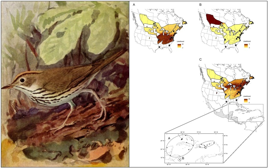 Ovenbird isotope connectivity map