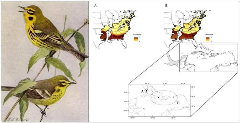 Prairie Warbler isotope connectivity map
