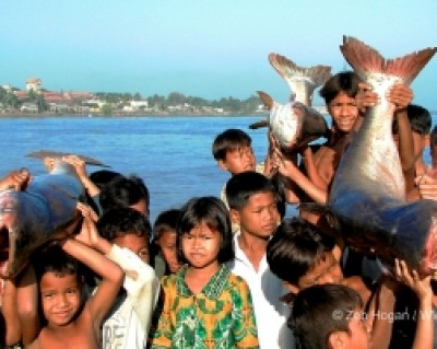 Fish migration and children