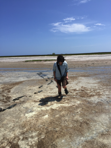 Trudging through and sinking into mud flats in search of our birds. Laguna Madre, Padre Island National Seashore