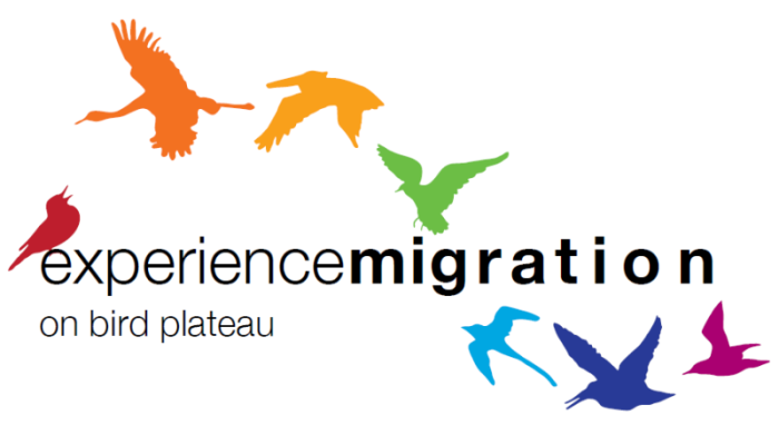 experience_migration_birds
