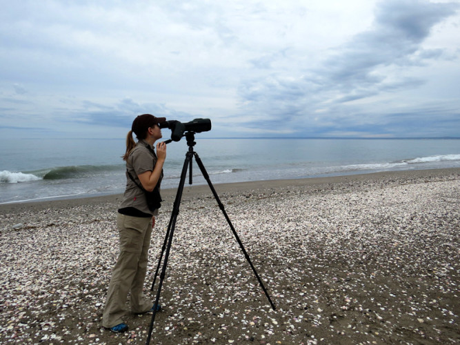 Autumn-Lynn Harrison, Smithsonian Migratory Bird Center, following a flock of birds with a spotting scope. Puerto San Antonio Este in Argentina. Photo by Marcelo Bertellotti