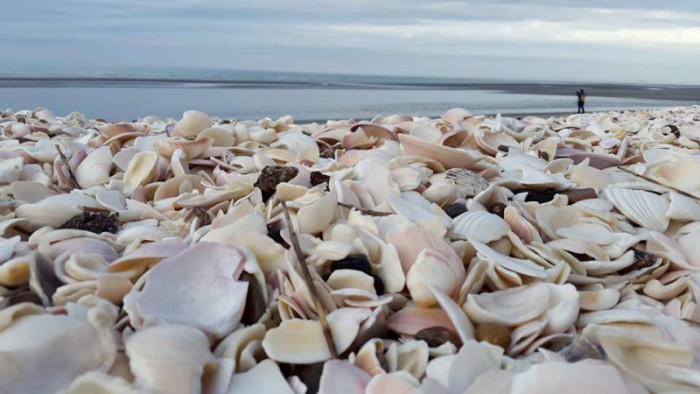 The beach of shells, Puerto San Antonio Este. Photo by Sofia Capasso