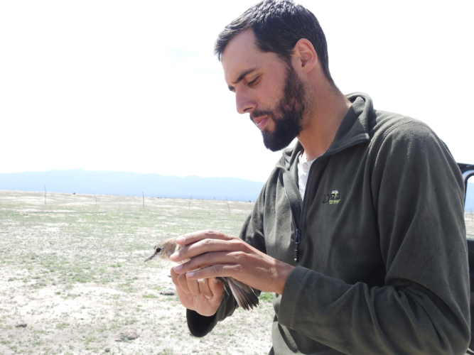 Julio with a Mountain Plover in hand, making sure the plover was not injured by the net and healthy enough to band/tag. Credit: Alli Pierce