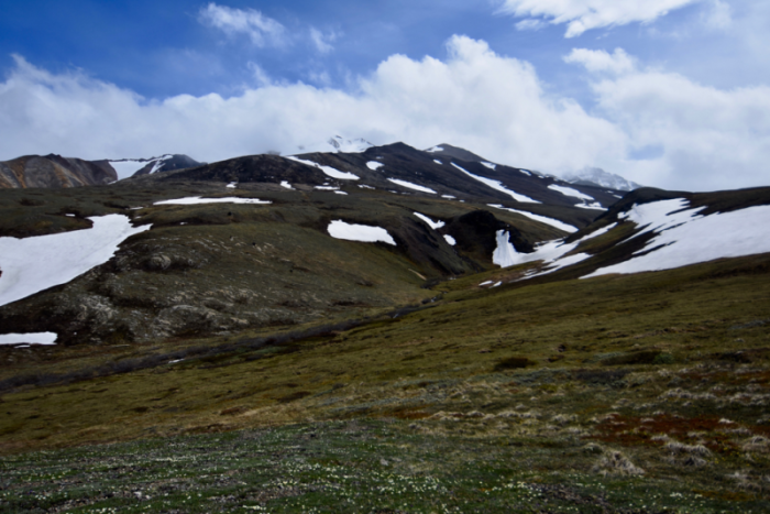 Alpine tundra above the East Fork of the Toklat River where we saw three Long-tailed Jaegers in Denali National Park. Photo by Mary Lewandowski