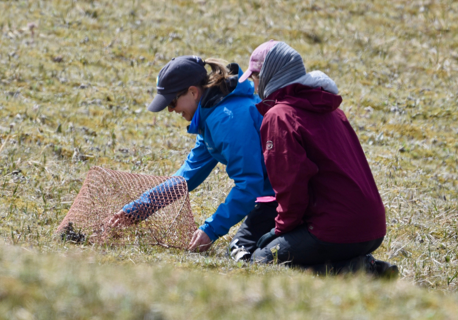 Dr. Autumn-Lynn Harrison (Smithsonian Migratory Bird Center) and Laura Phillips (Denali National Park) testing the trap placement over the nest in its open position.
