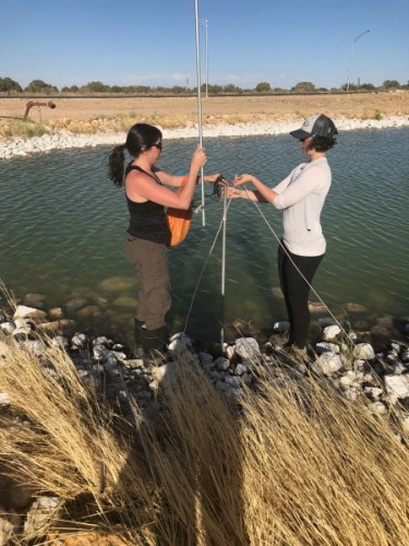 Elly and Amy setting up nets around the pond. Photo: Jackie Scarpignato